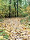 Free Autumn Forest Path Stock Images - 27039764