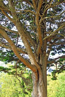 Old Mature Tree Stock Photos