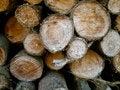 Free Wood Pile Stock Photo - 27040350