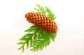 Free Fir-cone Stock Photos - 27046373