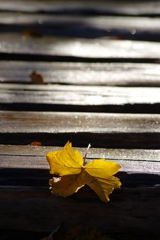 Yellow Leaf On Wooden Path Covered With Frost