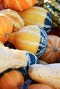 Free Orange And Yellow Gourds Royalty Free Stock Photos - 27054778