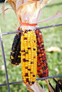 Free Colorful Corn Royalty Free Stock Photography - 27054837