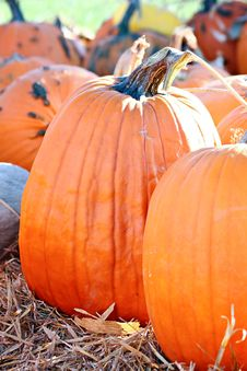 Free Big Orange Pumpkin Stock Photo - 27054730