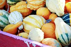 Free Colorful Gourds Royalty Free Stock Photo - 27054755