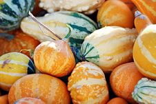 Free Orange Gourds Royalty Free Stock Photo - 27054855