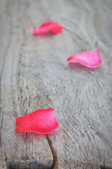 Petals Of Pink Roses On A Wooden Texture. Royalty Free Stock Images
