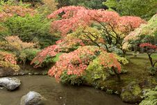 Free Autumn Charm In Japanese Garden Royalty Free Stock Photo - 27058945