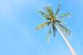 Free Coconut Tree Stock Photos - 27071083
