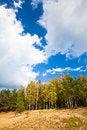 Free Woodland Scene Stock Images - 27073214