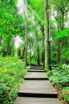 Free Pathway In The Forest Park Stock Photos - 27073163