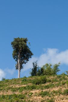 Free One Tree On Hill Stock Photos - 27073513