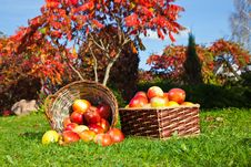 Free Red Apples In A Basket Stock Images - 27073784