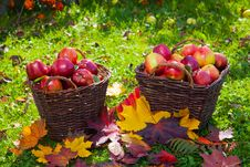 Free Basket With Red Apples Stock Photo - 27074430