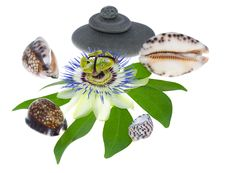 Free Passionflower Flower With Cockleshells And Stones Royalty Free Stock Photography - 27078557