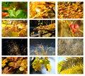 Free Autumn & Meadow Set Stock Image - 27088761