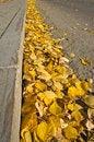 Free Yellow Fallen Leaves On The Sidewalk Stock Image - 27089921