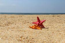 Free Sea Stars, Starfishes Stock Photography - 27080242