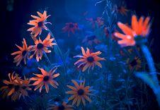 Free Flowers Flourescent Stock Photos - 27080643