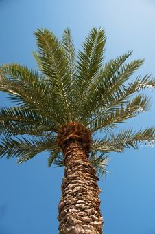 Free Palm View From Below Stock Photo - 27083610