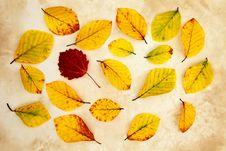 Free Beech Autumn Leaves Stock Photos - 27085483