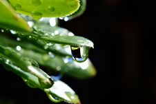Free Raindrop On Leaf Royalty Free Stock Photography - 27088377