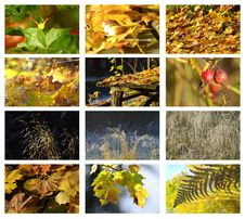 Free Autumn & Meadow Set Stock Image - 27088761