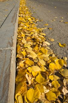 Free Yellow Fallen Leaves On The Sidewalk Stock Image - 27089921