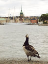 Free A Goose Looking At The City Stock Images - 27096914