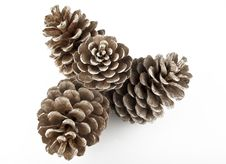 Free Pine Cones Royalty Free Stock Photography - 27097737