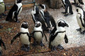 Free Penguins Stock Photography - 2713632