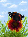 Free Butterfly On Flower Stock Photos - 2716163