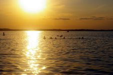 Free Swimmers At Sunset Stock Images - 2710714