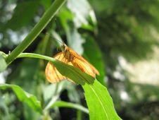 Free Julia Butterfly (Dryas Iulia) Stock Photo - 2711090