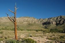 Free Guadalupe Mountains Stock Images - 2711244