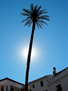 Free Palm Tree Over Rooftops Royalty Free Stock Image - 2713306