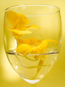 Free Flower In Glass Stock Photo - 2714260