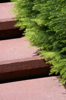 Free Fern On Steps Royalty Free Stock Photos - 2714378