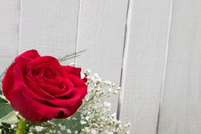 Free Big Red Rose Royalty Free Stock Photography - 2715387