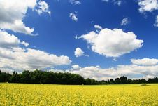 Free Landscape With Yellow Flowers Royalty Free Stock Photos - 2715588