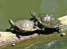 Free Amorous Turtles Stock Image - 2715911