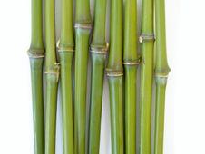 Free Bamboo Royalty Free Stock Photography - 2718197