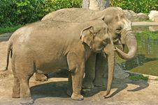 Free Pair Of Elephants Stock Photos - 2718303