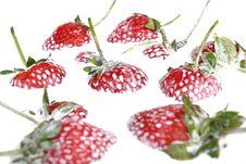 Free Strawberries In Cream Royalty Free Stock Photo - 2718895