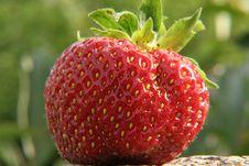 Free Strawberry Stock Image - 2719481