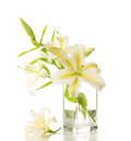 Free Bouquet Of White Lilies Stock Image - 27104751