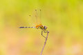 Free Dragonfly Stock Images - 27107374