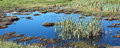 Free Panorama Of Marshy Wetlands Stock Photo - 27117340