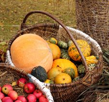 Free Pumpkin Basket Stock Photos - 27117943
