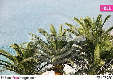 Free Three Palm Trees On Beach Stock Photo - 27127980
